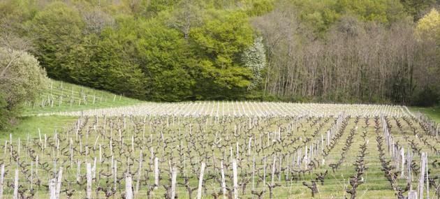 Bordeaux-vignes