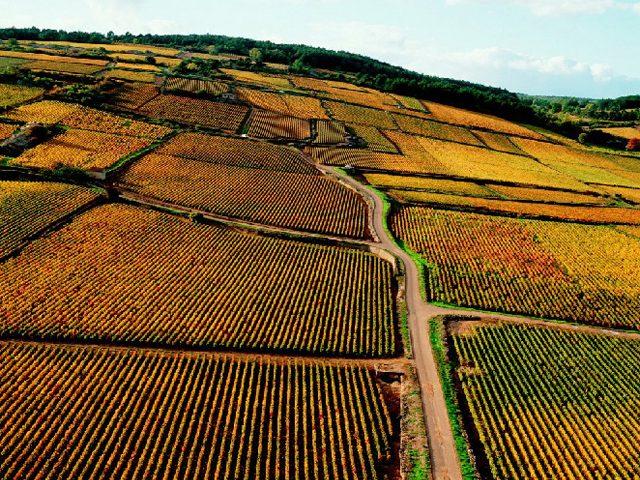 bourgogne-vignes-lemaire-hebdo-vin-chine