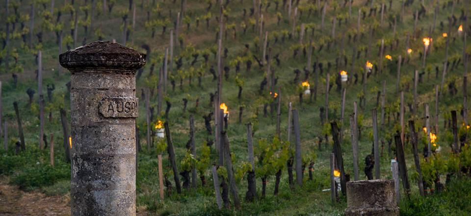 Vignes-gel-1-lemaire-vin-rouge-chine