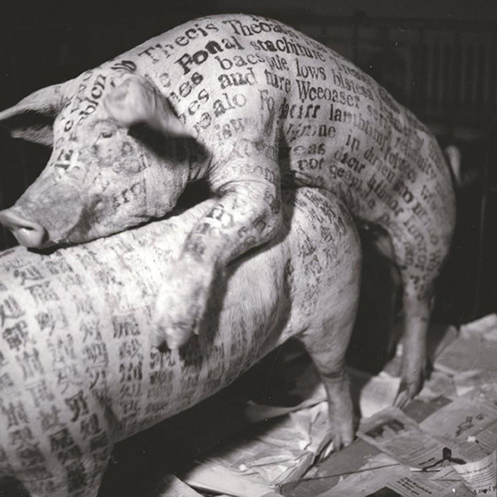 Guggenheim-cochon-lemaire-hebdo-vin-chine