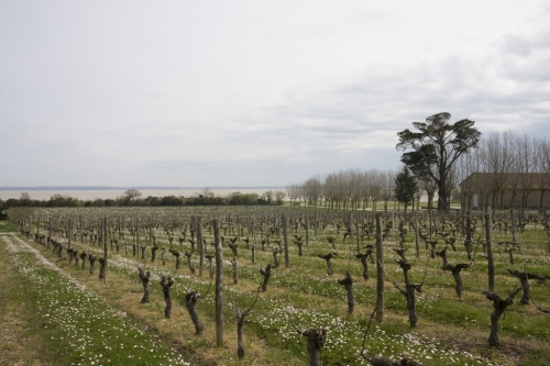 Loudenne-vignes-gironde-lemaire-hebdo-vin-chine