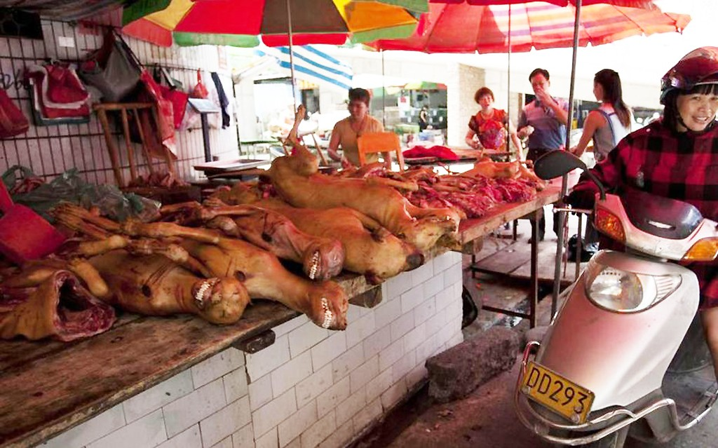 chiens-au-marche-wuhan-chine-lemaire-hebdo-vin