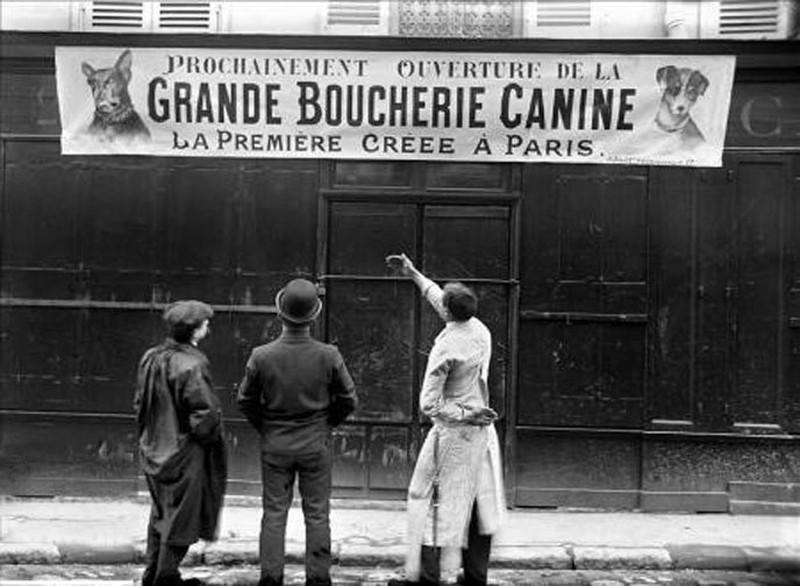 chiens-boucherie-france-paris-consommation-lemaire-hebdo-vin-chine