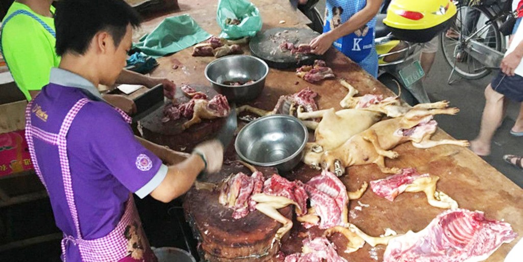chiens-cuisine-yulin-chine-consommation-lemaire-hebdo-vin