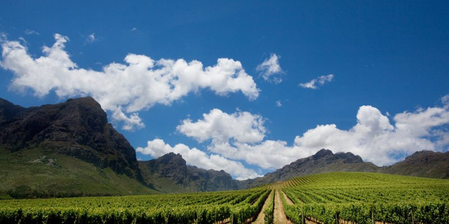 Cape-afrique-sud-great-wine-capitals-lemaire-hebdo-vin-chine