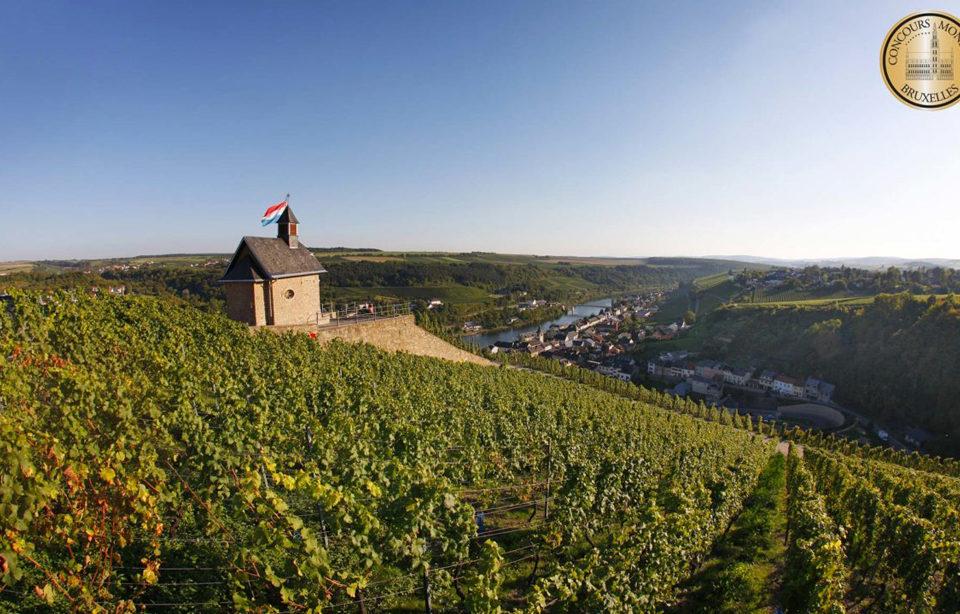 Luxembourg-vignes-concours-bruxelles-lemaire-hebdo-vin-chine